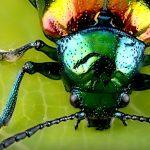 Biologische Vielfalt: Auf der Spur der Insekten