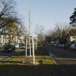"""Wir sammeln für """"unseren"""" Stadtbaum!"""