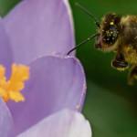 Erster Bericht des Welt-Biodiversitätsrates Ipbes Industrievertreter distanziert sich vom Bestäuberbericht