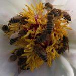 Biodiversität - Neustart
